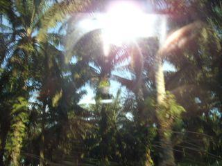 Trip to johore jungle 1089