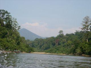 Trip to johore jungle 1156