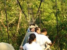 Tree_top_walk